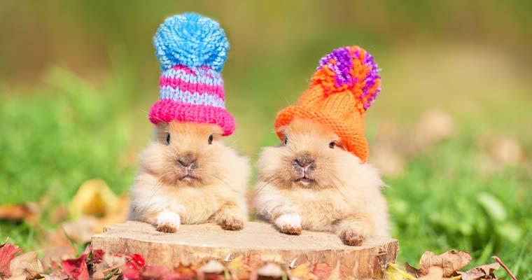 25+ Rabbit Fun Facts - RabbitPedia com