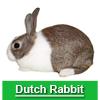 Navigate to dutch rabbit page