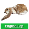 Navigate to english lop page
