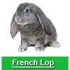 Navigate to french lop page