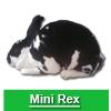 Navigate to mini rex page