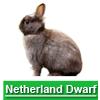 Navigate to netherland dwarf page