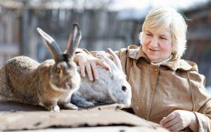 rabbit breeder with rabbits