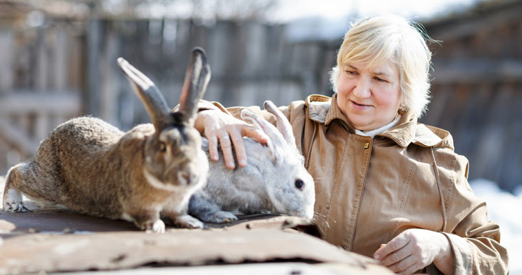 rabbit breeder with rabbits