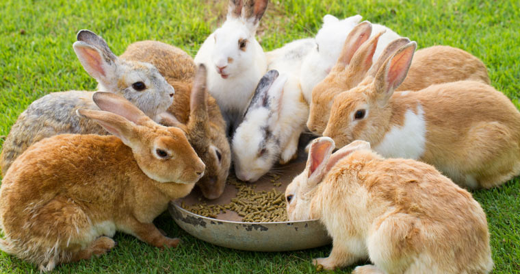 group of rabbits eating