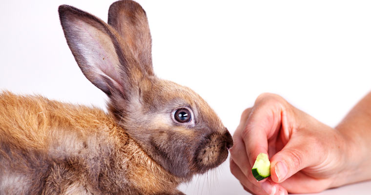 feeding a rabbit