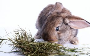 Why should my Rabbit eat Hay?