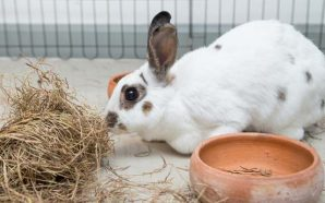 Ten tips for easier Rabbit Care