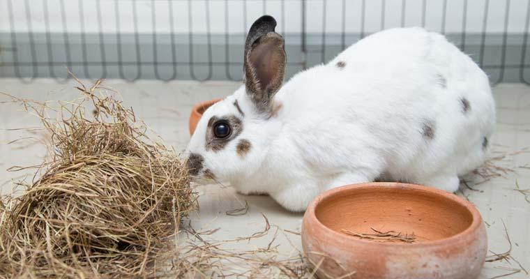 10 tips for easier rabbit care   rabbitpedia