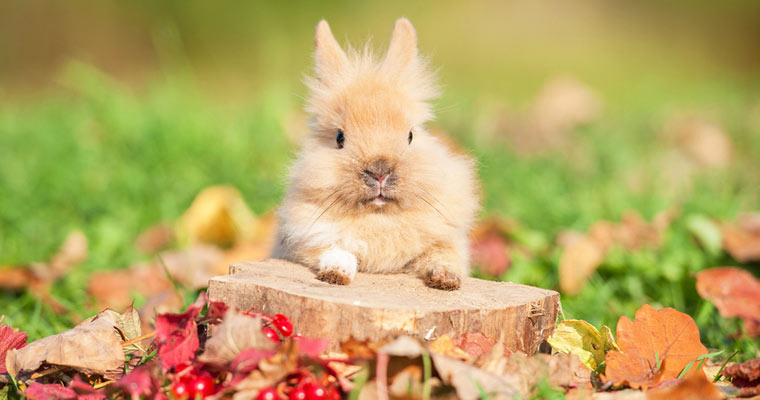 posing rabbit