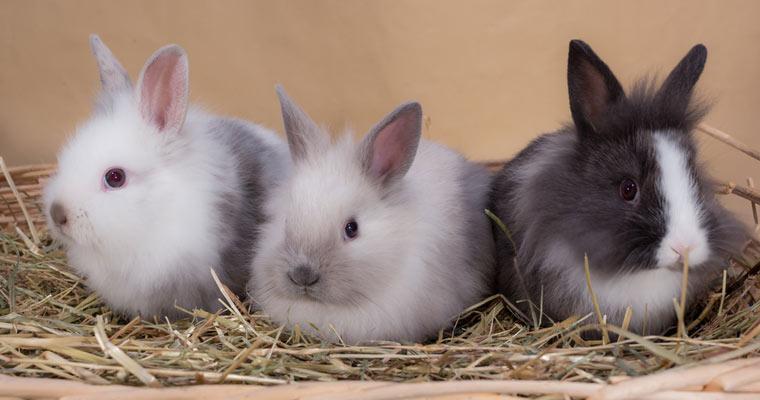 rabbits-posing