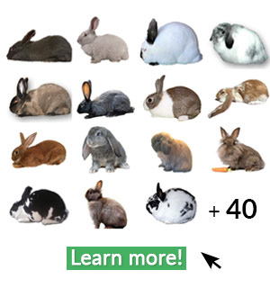 Navigate to rabbit breeds page