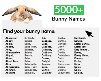 Navigate to bunny names list
