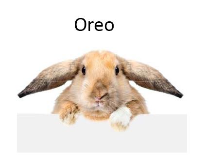 5000 Most Popular Rabbit Names For Your Bunny Rabbitpediacom