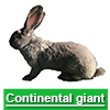 Navigate to continental giant page