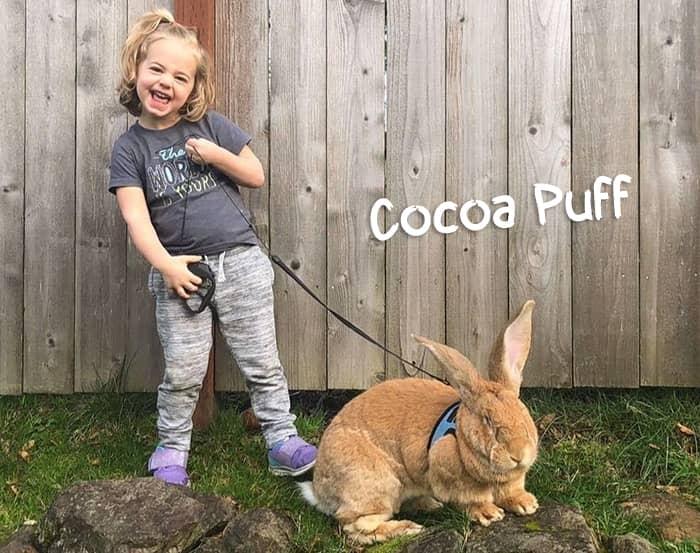 Cocoa puff rabbit