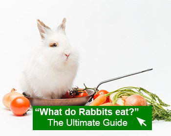 navigate to what do rabbits eat page