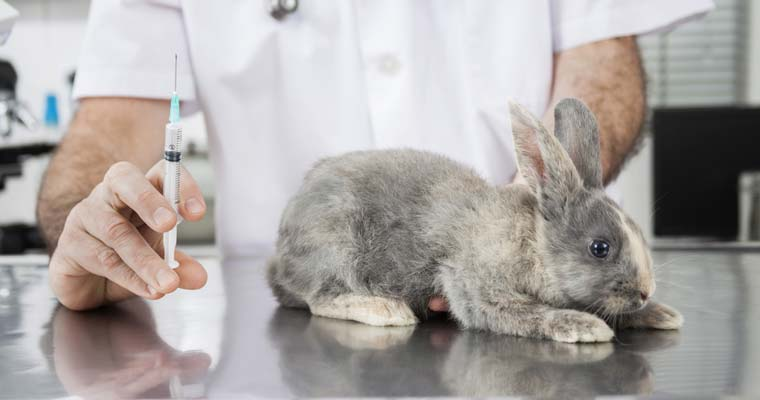 rabbit vacciniation