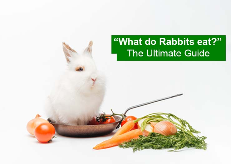 What Do Rabbits Eat? The Ultimate Guide - RabbitPedia.com