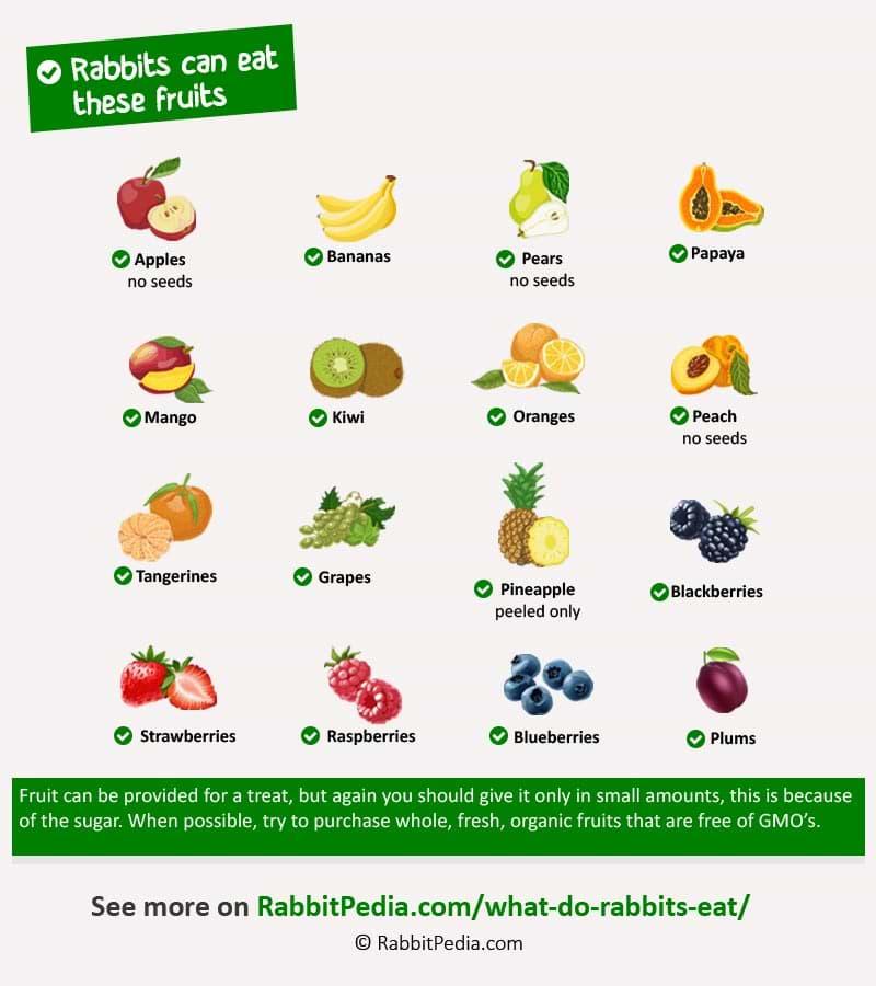 safe fruits for rabbits