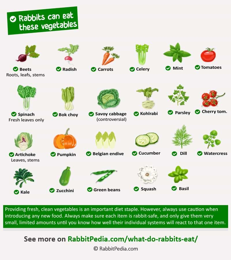 safe vegetables for rabbits